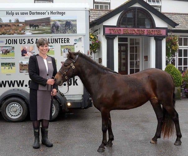 Dartmoor Pony and Two Bridges Hotel Dartmoor Devon