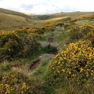 Footpath to Wistman's Wood
