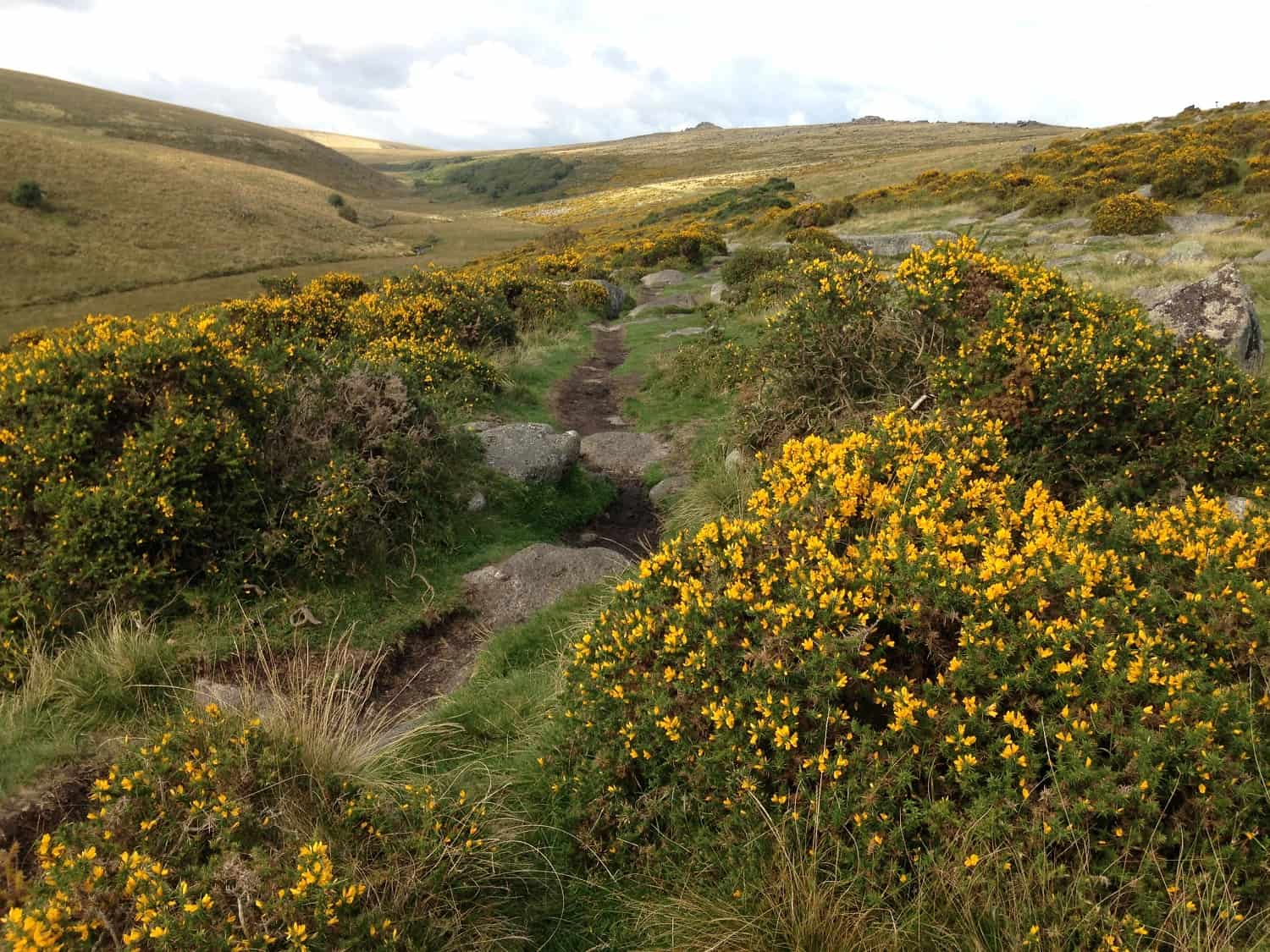 Dartmoor footpath to Wistman's Wood