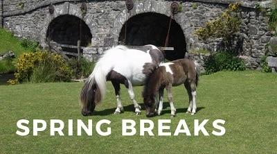 Spring Breaks on Dartmoor